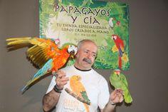 La tienda de loros de Madrid en el estreno de RIO 2. Ara Catalina y Amazonas Autumnalis Parrot, Madrid, Bird, Parrots, Amazons, Tent, Animales, Parrot Bird, Birds