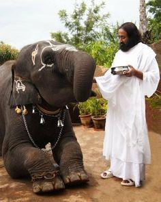 Elefante en la India