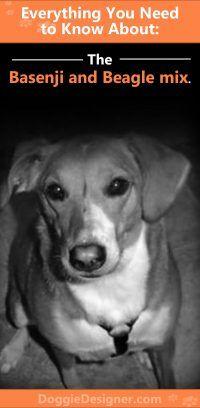 Basenji And Beagle Mix A Complete Guide Beagle Mix Beagle