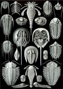 E. Haeckel