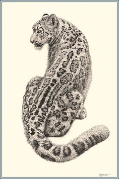 Cat in the Cool - Snow Leopard - Fine Art Pencil Drawings www.drawntonature.co.uk | Flickr - Photo Sharing!