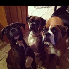 Boxers are like potato chips, you can't have just one :)