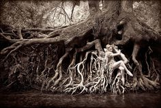 Wonderland : Dryad by Kirsty Mitchell, via Flickr