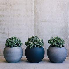Muffin Top Pots by The Balcony Garden | Garden Pots | Pot Plants | Planters | Flower Pot| Designer Pots