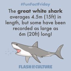 FUN FACT: The great white shark averages in length, but some have been recorded as large as long! Fun Facts For Kids, Fun Facts About Animals, Animal Facts, Wtf Fun Facts, Funny Facts, Facts About Australia, Animal Captions, Australia Animals, Great White Shark