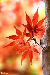 Autumn Rain, Autumn Leaves, Red Leaves, Japanese Red Maple, Autumn Scenery, Fall Wallpaper, All Nature, Fall Pictures, Shades Of Red