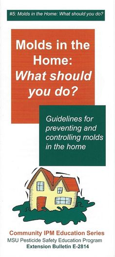 Molds in the Home: What Should You Do?