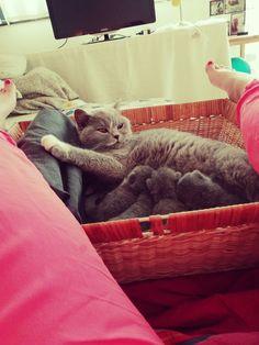 Mommy 'Roomie' and her fluffy kitties 💕 #inlove #catsandcolours #bestmommy #instacat #instagood #meditation #catsandcoloursdg #lovecats #lovepets #Belgium #leuven