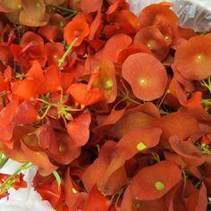 po hina hina haku plants plants spanish moss
