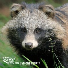 Fur in Fashion: With many warm, chic alternatives available, there's no reason to wear animal fur. #furfree