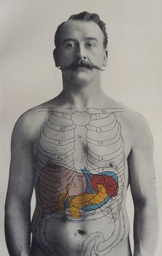 Antique 1900 Medical Diagram Print Human Anatomy Liver Spleen Pancreas Moustache | eBay
