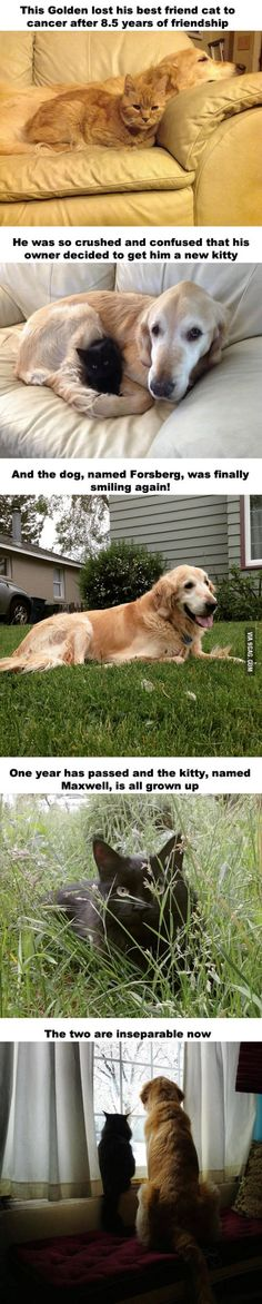 This dog lost his friend to cancer, so they decide to get him a new friend