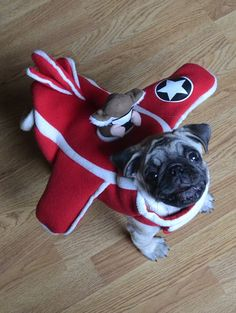Our Airplane Pug Boo, mascot for the wonderful animal rescue organization Pilots N Paws #pilotsnpaws #animalrescue #pugcostume #pugplane #pugairplane