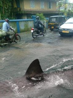 "Guys on motorcycle: ""man this day can't get any worse"" Shark: ""he he juuuust waaaait"""