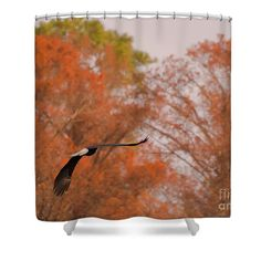 Lake Shower Curtain featuring the photograph Fall Eagle by Scott Hervieux