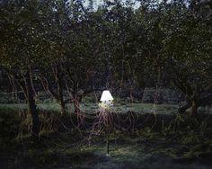 Photographies de piles naturelles pile biologique 01 photographie bonus art