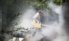 US Food and Drug Administration finds 'no significant' environmental impact of experimental release of insects after 15 Zika infections were reported in Miami