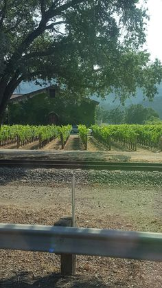 View with grapevines in front