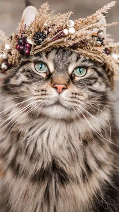 I Love Cats, Cute Cats, Animals Beautiful, Cute Animals, Kinds Of Cats, Cat Hat, Cats And Kittens, Fur Babies, Creatures