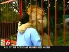 Lion loves his rescuer! The woman in the video found the lion, injured in the forest, on the verge of death. She took the lion home with her and nursed it back to health. Later, when the lion was better, she made arrangements with a zoo to take the lion. Some time passed before the woman had a chance to visit the zoo. This video was taken when she walked up to the lion's cage to see how he was doing. Watch the lion's reaction when he sees her!!
