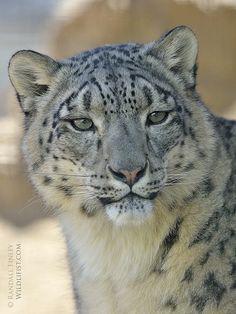 Милые Детеныши Животных, Дикие Животные, Красивые Кошки, Тигрята, Бенгальский Тигр, Зеленые Глаза, Леопарды, Большие Кошки