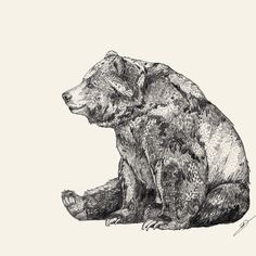 Bear // Graphite Art Print by Sandra Dieckmann | Society6 Bears, Lion Sculpture, Statue, Bear, Sculpture