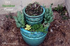 This lush two-tier succulent planter was easy to make and looks fantastic!: succulent planter how to, flowers, gardening, how to, succulents Succulent Planter Diy, Diy Planters, Garden Planters, Succulents Garden, Planting Flowers, Planter Ideas, Succulent Display, Colorful Succulents, Flower Gardening