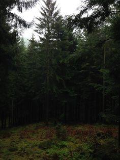 Forêt de Guirbaden