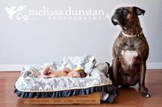 Baby and best friend, www.tangledlilac.com, #dogphotography #newbornphotography #bestfriends
