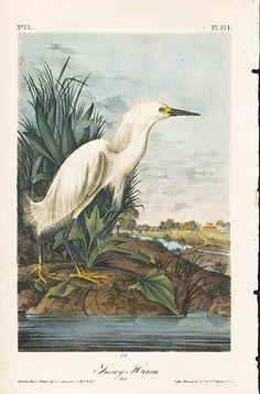John James Audubon Bird Prints 1st Edition 1840, Volume 6 SNOWY HERON