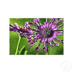 African Daisy Flowers- Purple Canvas Wall Art Stretched Canvas Print
