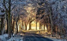 дорога, деревья, утро, иней .