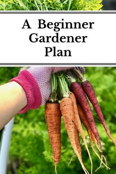 A step-by-step guide to planning out your very first garden or starting a new garden from scratch!