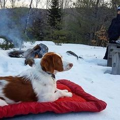 Has anybody tried winter camping with their dog? Photo: /live/.and.let.wander