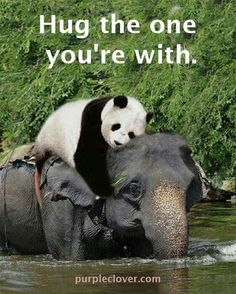 This is for my daughter Gina. The panda symbolizes me since it's my fav animal & the elephant is u since that's ur fav animal. I'm giving u a big hug letting u know I luv u. and telling u everything will be ok soon God will always be with you.