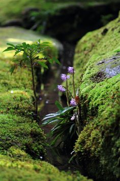 Beautiful World, Beautiful Places, Beautiful Pictures, Paludarium, Vivarium, Walk In The Woods, Amazing Nature, Mother Earth, Wild Flowers