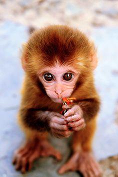 Sweet Little Monkey! ♡