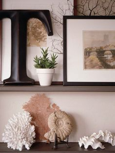 Shells On Display  ~  Large shells, individually displayed, are as attractive as fine sculpture. Look for perfect pieces that will sit flat or be propped up on a stand or pedestal.