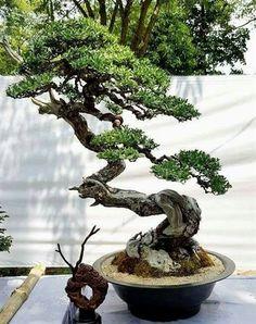 The best guide of Bonsai, gain how to grow Bonsai Trees Tattoo. Bonsai Source: https://i.pinimg.com/originals/18/d1/6f/18d16fdc840164f12db701cba3c56158.jpg
