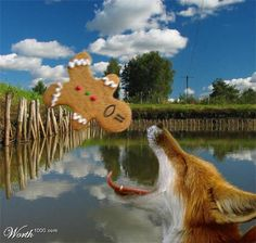 I loved this story...run run run as fast as you can, you can't catch me I'm the gingerbread man...