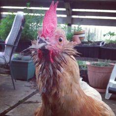 Mary Ann, the wet, angry bird