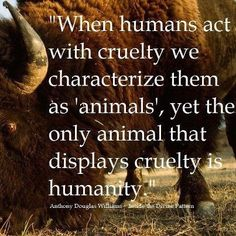 """When humand act with cruelty we characterize them as 'animals', yet the only animal that displays cruelty is humanity."""