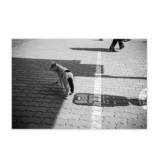 Mayu February 2015 #cat #blackandwhitephotography