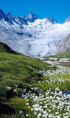 Mountain meadow in Swiss Alps wow the hills really are alive !