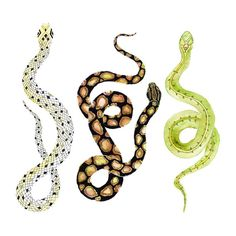 Southwest Snake Art.  Print of my original by SnoogsAndWilde, $34.00