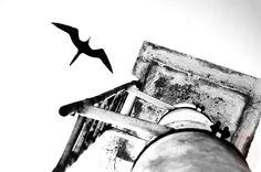 Black and White Bird Photography Download by MiTierraEsTuTierra