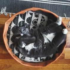 Luck be a Lady, Cat Basket