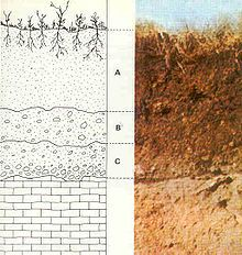 Science dirt soil plant growth on pinterest soil for Properties of soil wikipedia