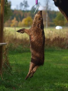 Jagen und Sammeln - Die Urformen der Selbstversorgung