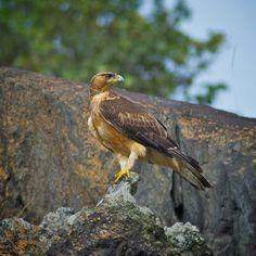 Eagle #bird #nature #animal
